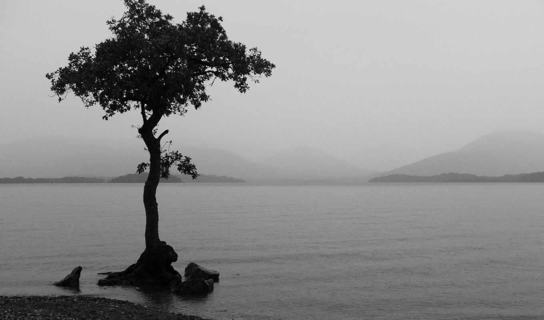 обои, дерево, quot, одинокое, white, black, свой,