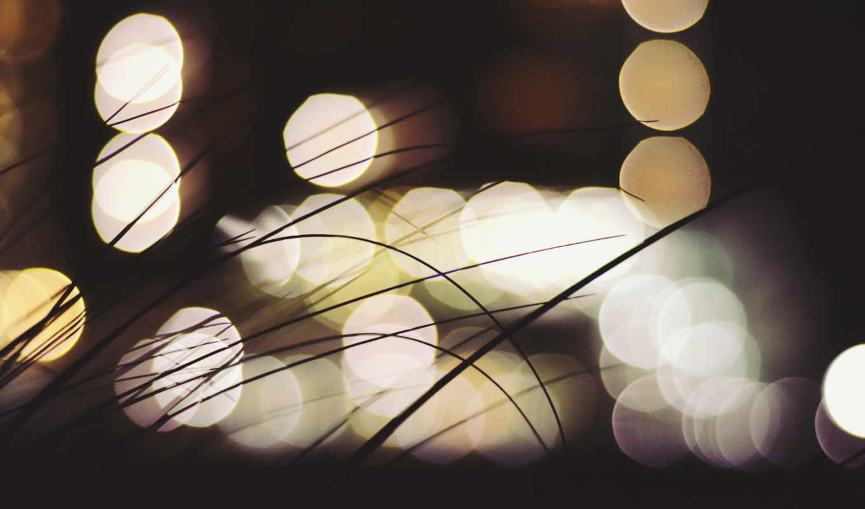 макро, природа, ночью, огни,