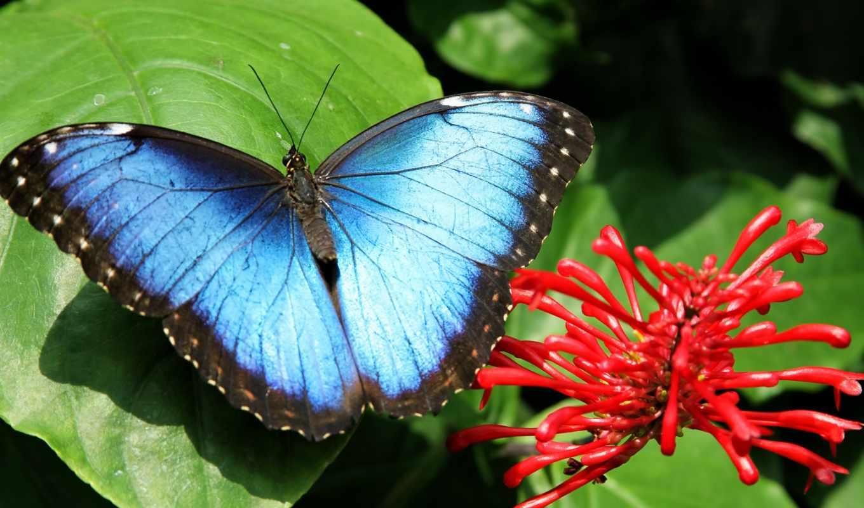 nature, flower, macro,