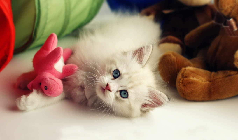 котенок, котята, пушистый, картинку,