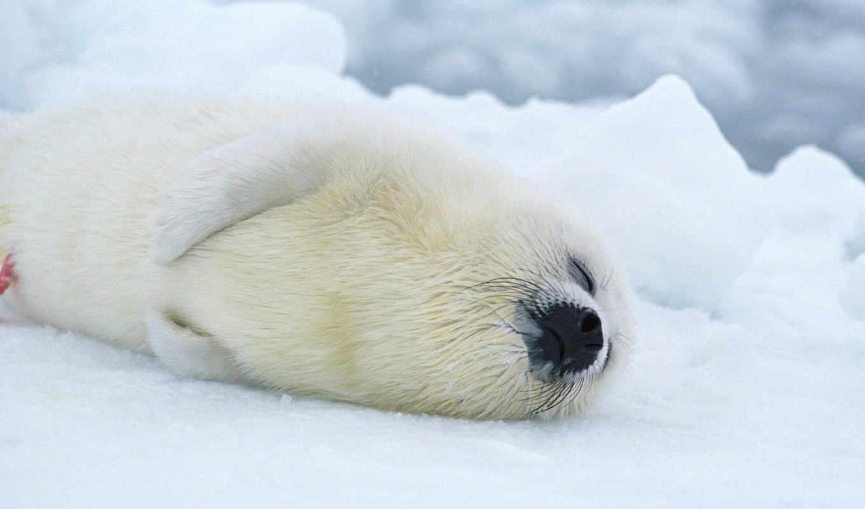 море, white, baby, lion, пингвины, max, photos, obs, her, девушка,