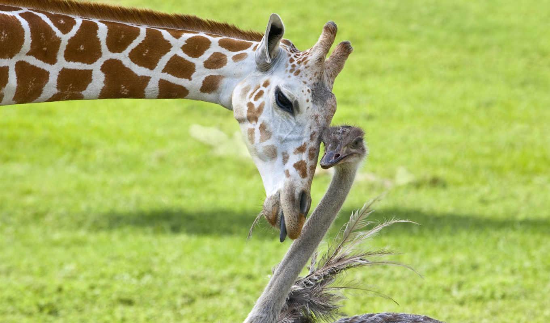 животных, стоит, animal, friendships, дружба, этих,