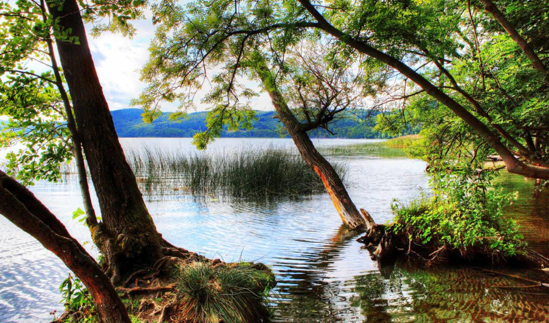 природа, деревья, германия, леса, реки, landscape, года, трава, времена, горы, мосты,