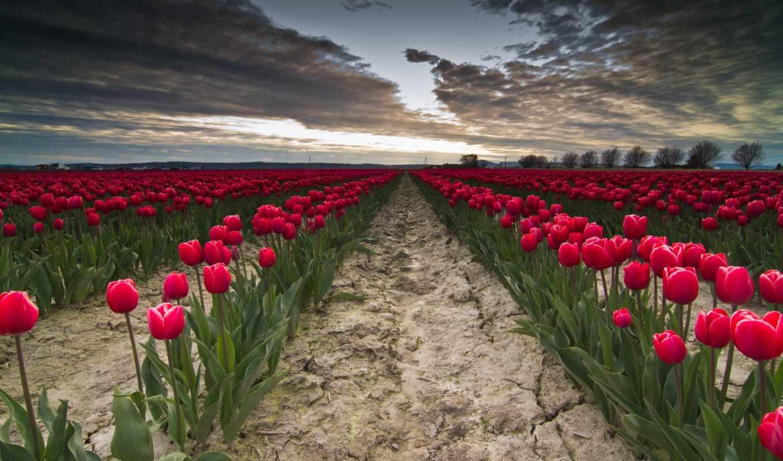 цветы, найти, войдите, contact, других, зарегистрируйте, ваших, тюльпаны, друзей,