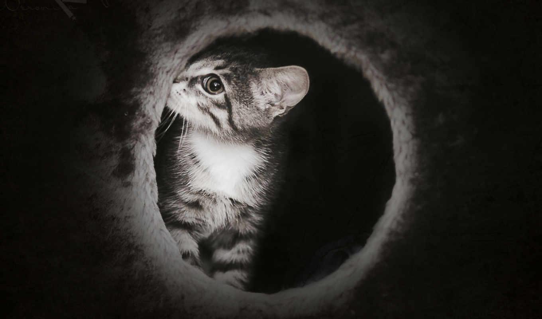 кот, темно, котенок, nice, mysterious, dark, тюлень,