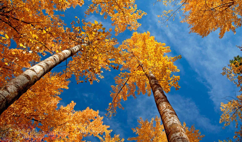 вышивки, autumn, trees, схемы, wallpaper, оригинал, download, авторы, схема, вышивка, крестом,