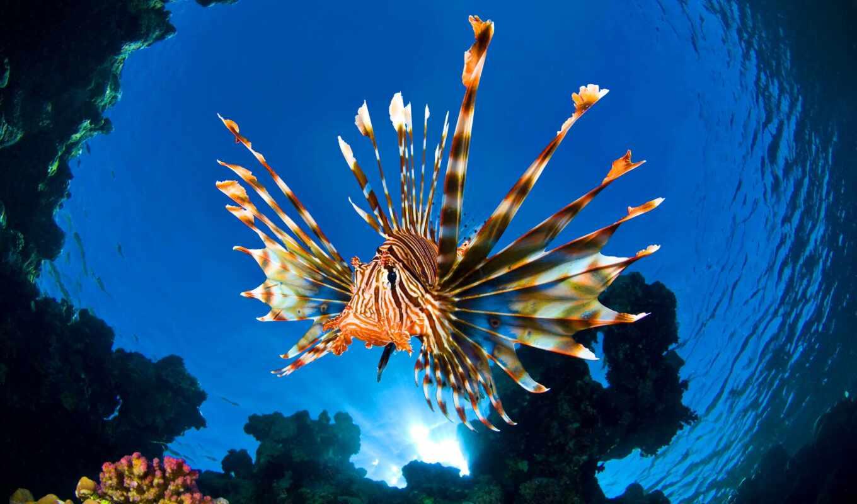 море, fish, красном, рыбы, steve, водах, anemone, февр, lion, клоуны, филиппин, морском, bloom, alex, mustard, banfi, franco, египте, акула,