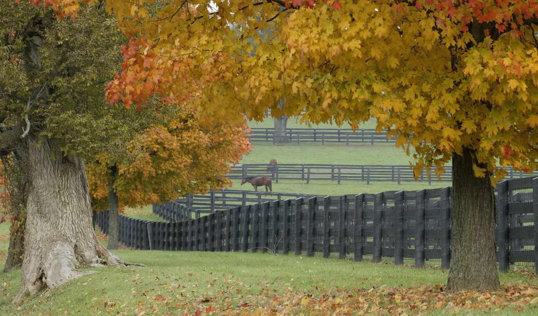 ферма, лошадиная, деревья, забор, трава, листья, лошадь, игра,