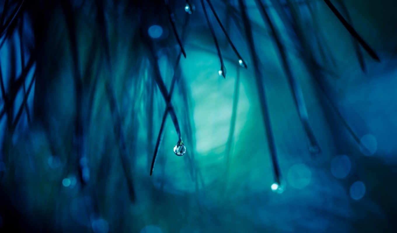 макро, трава, капля, картинка, вертикали, имеет, горизонтали,