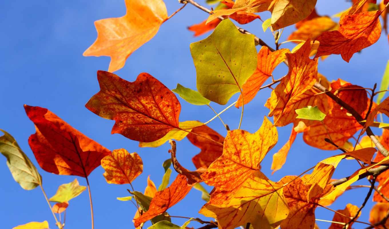 листья, осень, небо, дерево, ветки, желтые, ветви, осенние, разноцветные,