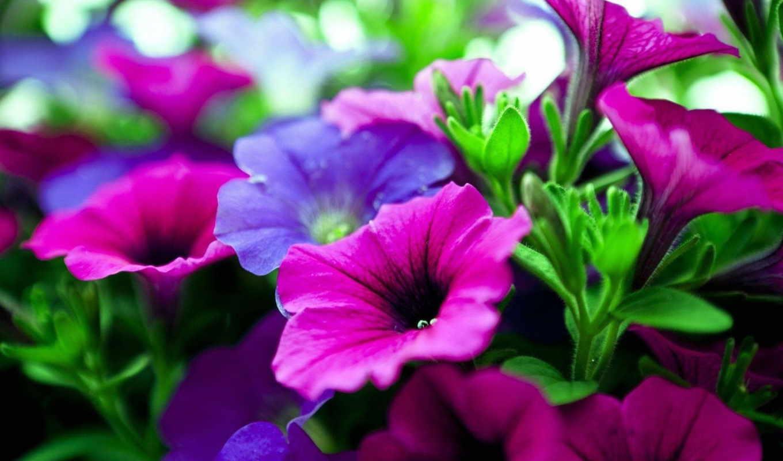 цветы, фиолетовые, кот, взгляд, розовые,