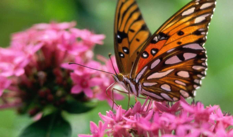 бабочки, красивые, бабочек, zhivotnye, животных,