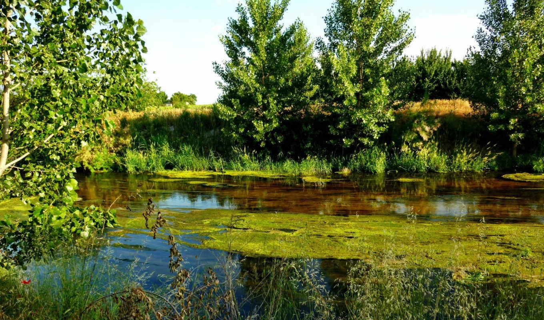 ,пруд,лес,водоросли,
