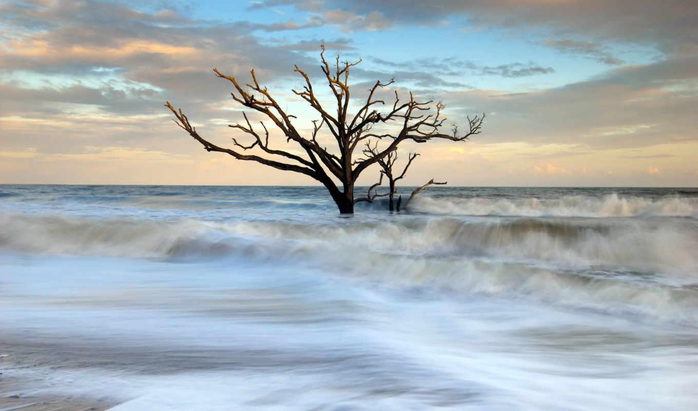 drzewo, morze, suche, fale, pulpit, słońca, zachód, портфель, tapety, drzewa,