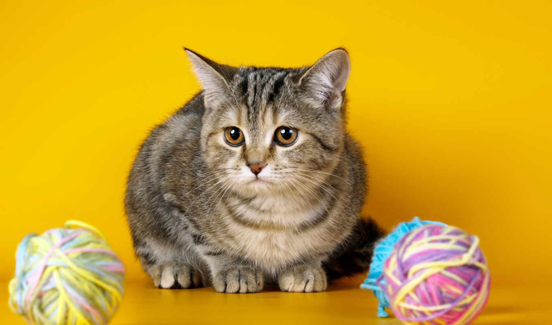 коллекция, магазин, кошки, яndex, tangled, ebay, клубки, коллекциях, mousediy,