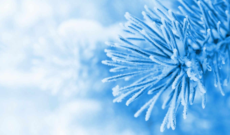 winter, schnee, filiale, makro, снег, ветка, код, макро, der, природа,