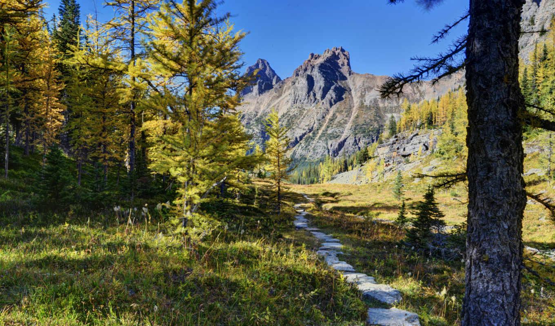 канада, горы, лес, park, yoho, деревья, national, озеро, landscape, природа,