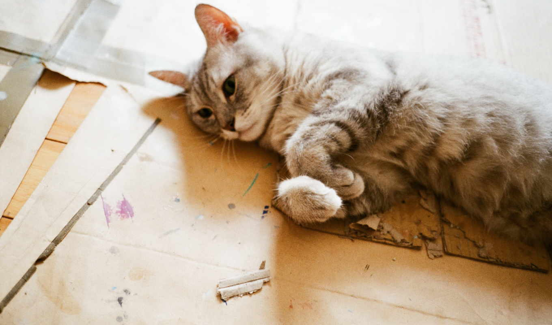 кошки, коты, смешные, reblog, notes, об, att, животных, любителей, again,