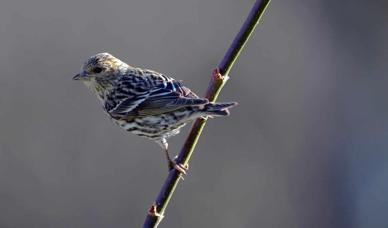 主题中展现鸟儿飞到后院的鸟食罐上进食以及在远处树林中休憩的景像, 在这款免费的windows, elliott, марта, 摄影家christopher, times,