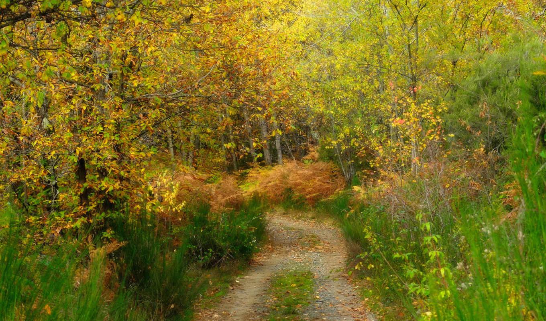 деревя, осень, лес, трек, трава, июнь,