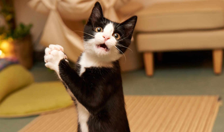 кот, удивлен, коты, meme, танцует, создать, pinterest, кошки, обсудить, их,