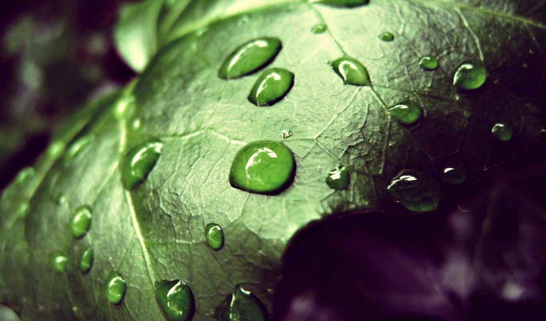 зелень,лист,капли,скачать