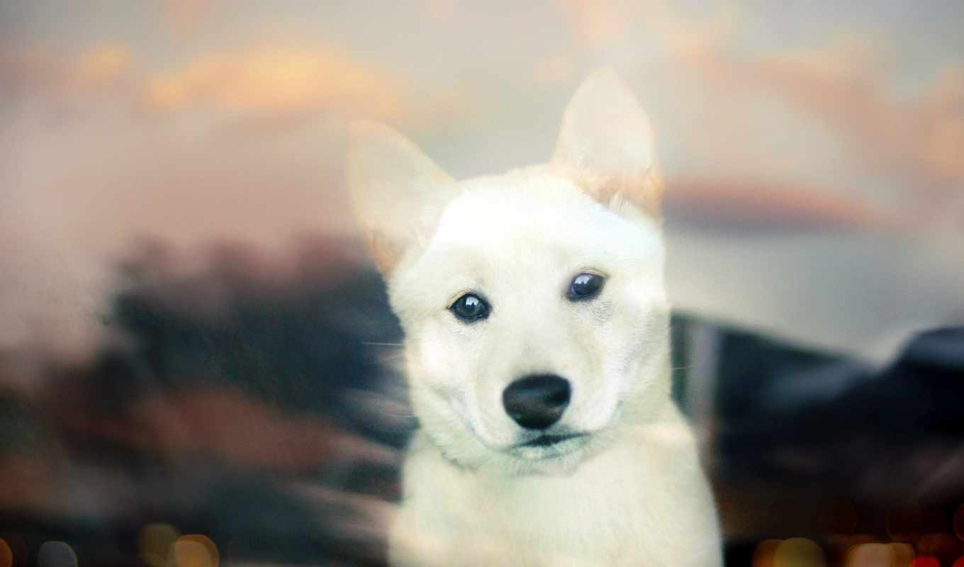 собака, puppy, bokeh, white,
