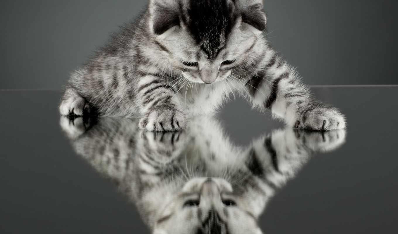 зеркало, отражение, кот, кошки, только, котенок,