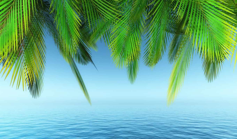 фон, palm, ноутбук, art, качество, море, космос, первую, seashore, природа