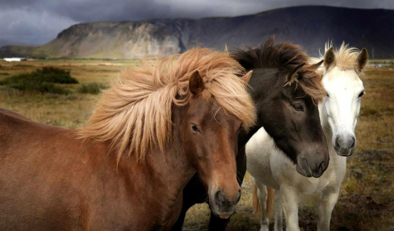 лошади, широкоформатные, горы, поле,