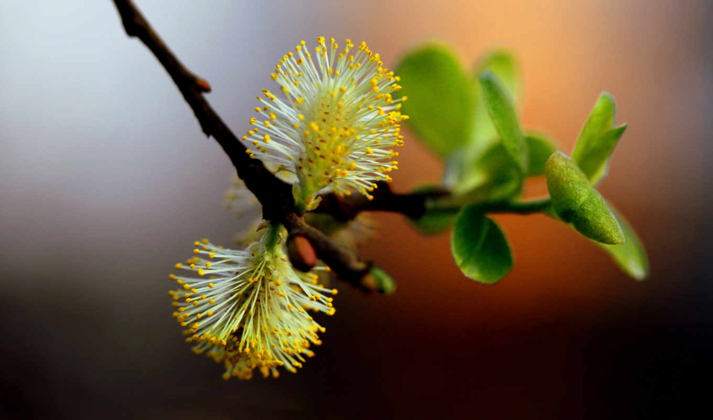 color, branch, подборка, макро, нежный, дек, девушек, листва, днем, красивых, реклама,