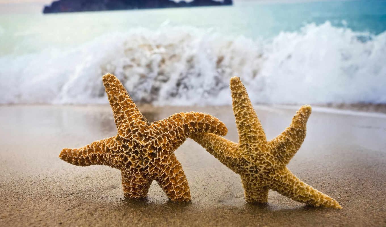 морские, красивый, раковины, marine, звезды,