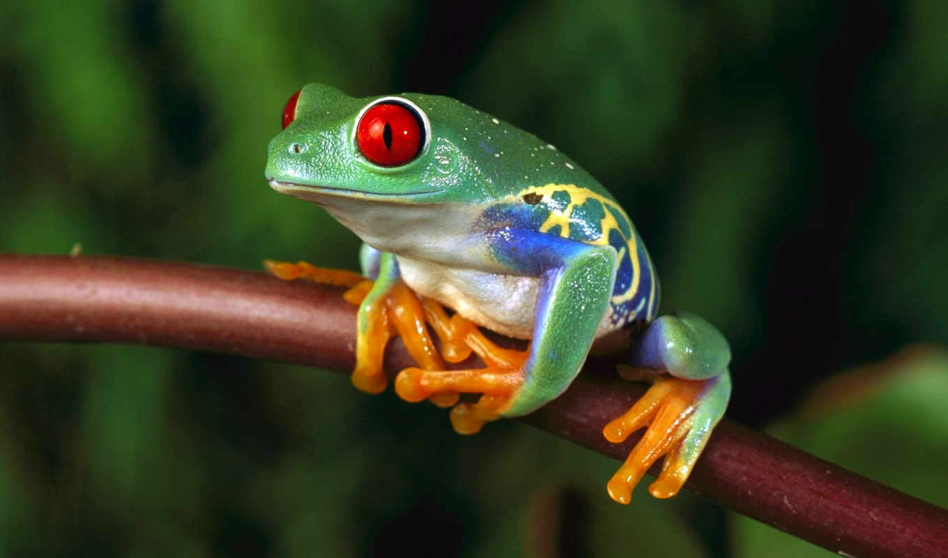 дерево, лягушка, frogs, see, more, save, pinterest, discover, об, helps,