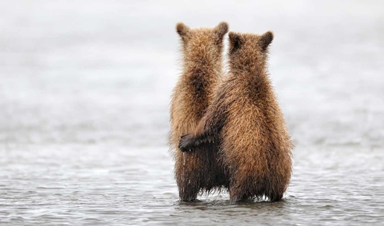 мужчина, love, животных, чувства, zhivotnye, любви, оказывается, инстинкты,