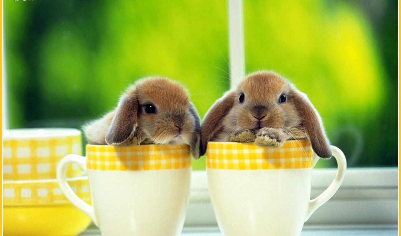 же, картинку, картинка, животные, кнопкой, мыши, кролики, чай, приглашаем,