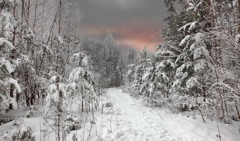 зима, лес, небо, снег, закат,