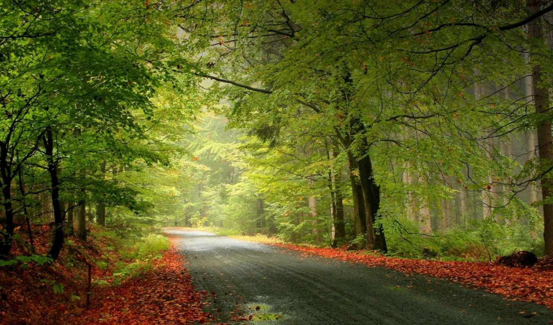день, первый, осень, лес, осени, normal,