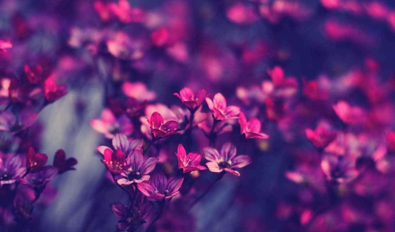 art, цветы, голубые,