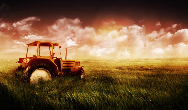 поле, трактор, голова, трава,