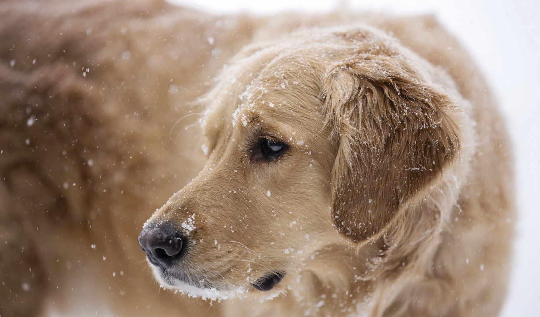 собака, снег, zima, drug, собаки,