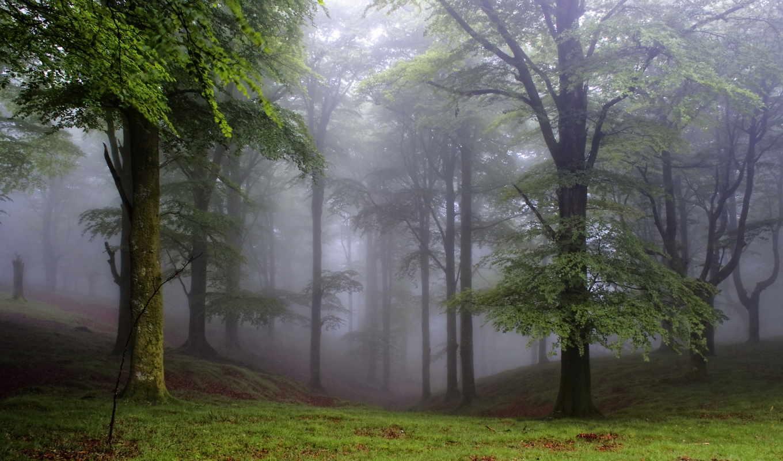 лес, деревя, поляна, природа, кб, jpeg,