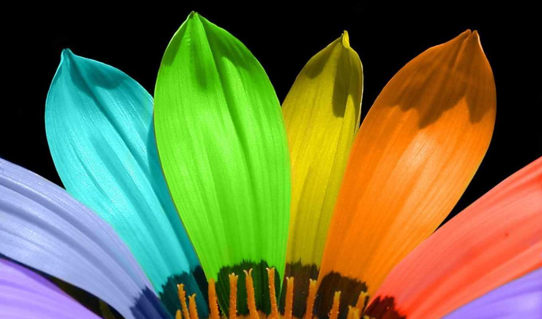 цветы, радужные, цветов, flowers, радужными, себе, радуга, everything,