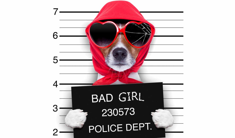 рассел, джек, бультерьер, смешные, собака, очки, jack,