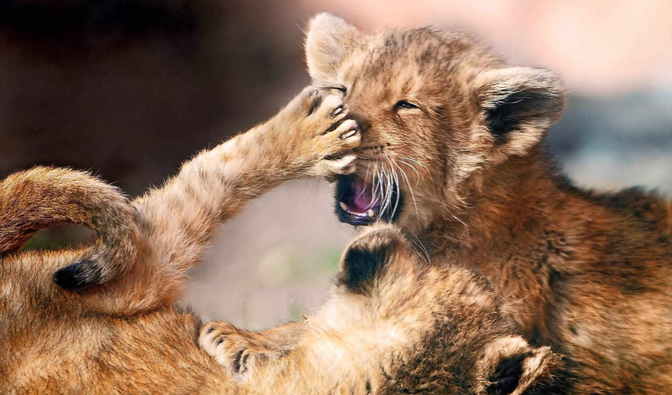 animals, животные, fights, animal, photo, adorable, comments, nice, baby,