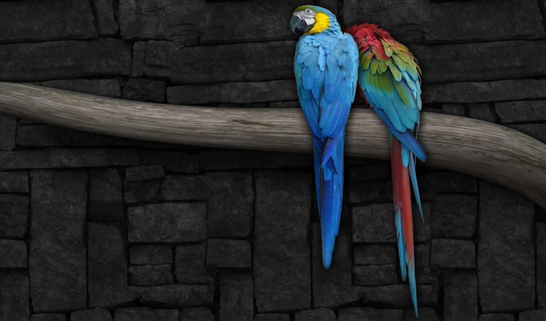 ветка, попугай, стена, рисунок, попугаи, ветке, животные,