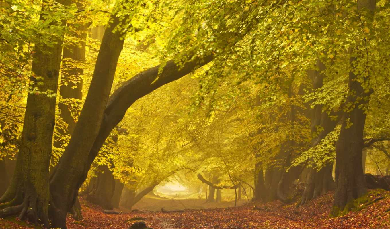 осень, пейзаж, парк, yahoo, tunnel, pictures, der, tree,