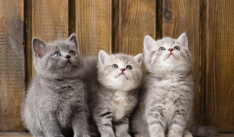 котята, zhivotnye,