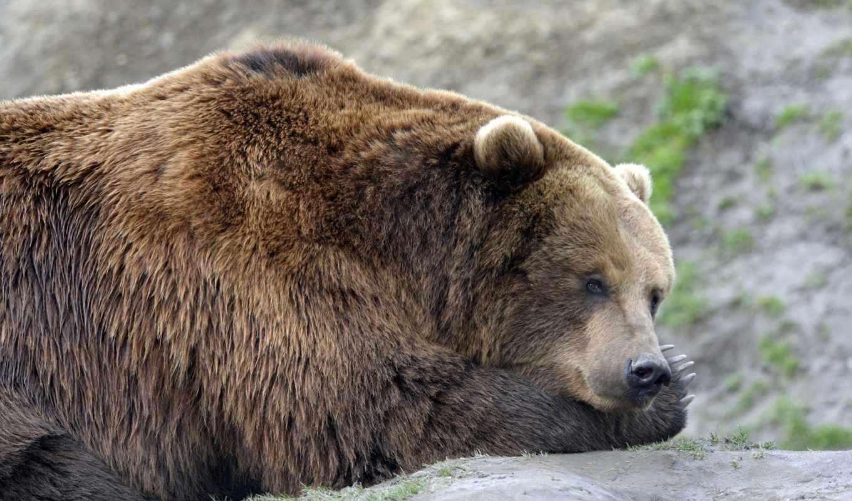 мишка, медведь,