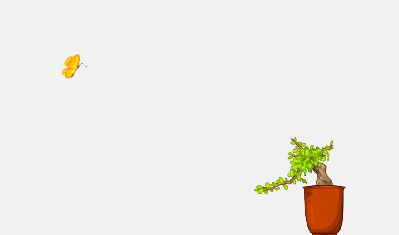 david, lanham, бабочка, растение, рисунки, bonsai, desktop,