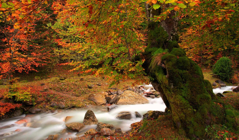 осень, природа, река, дерево,